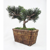 Arranjo Bonsai   Rattan Mini �rvores Artificial Plantas Flor