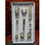Predator Trophy Skulls Pack For Wall Diorama Limited Edition