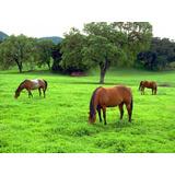 Capim Pastagem Cd9160 E Bermuda Gras Pra Equinos Caprinos E Bovinos 1kg Semente
