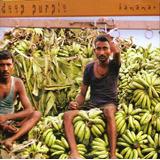 Deep Purple  cd  Bananas   Seminovo Nacional