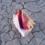 The Killers Wonderful Wonderful Cd Lacrado 2 Bônus Tracks