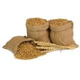 Trigo Em Grãos 3 Kg Produto Natural Integral Cereal