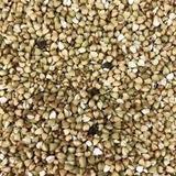 Trigo Sarraceno Grão   Trigo Mourisco 1 Kg